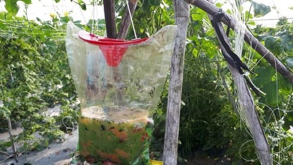 Bảo quản bẫy ruồi hữu cơ như thế nào đảm bảo nhất?