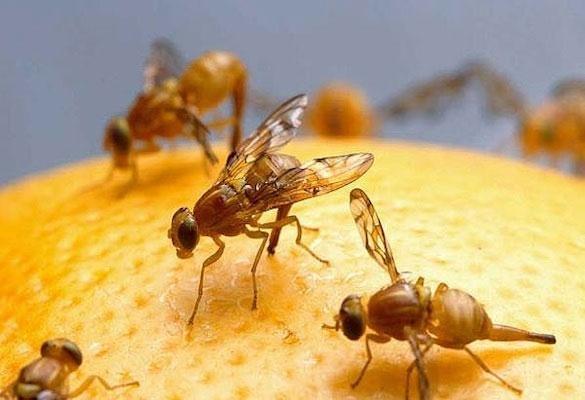Bẫy ruồi hữu có có hại không- Đến với Hewill để tìm câu trả lời
