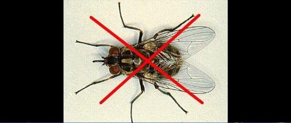 Phương pháp bẫy ruồi đơn giản cho mọi gia đình