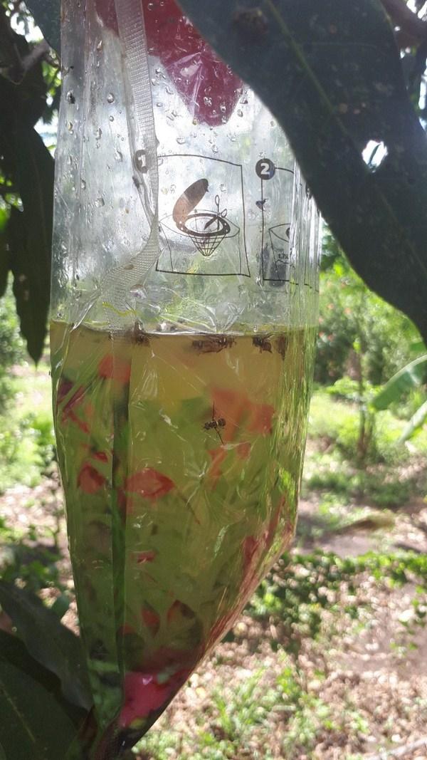 Tại sao chúng ta nên sử dụng diệt ruồi hữu cơ của Hewill